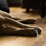 vivir-en-un-departamento-con-mascotas